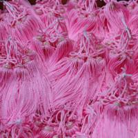 ピンクの撚り房